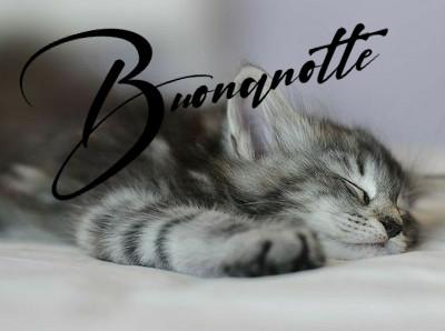 Buonanotte gatti, immagini nuove e belle di teneri e divertenti gattini, da scaricare gratis, per augurare una dolce e serena notte ai tuoi amici di WhatsApp e Facebook